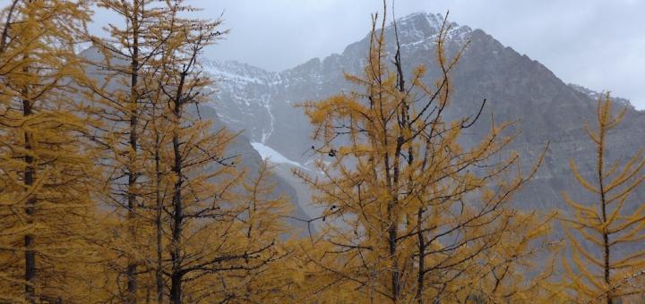 Best larch forest hikes in Alberta's mountains